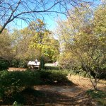 Coffman Park