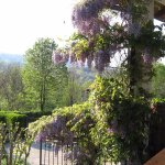 Wisteria always looks so beautiful on the front balcony with the mountains and forests as a back
