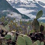 Photo of Intense Peru