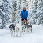 Dog sledding is a truly Northern experience