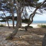 Playa Arenal De Son Saura Foto