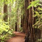 Photo de Jedediah Smith Redwoods State Park