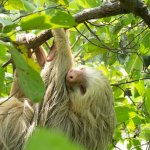 Spider Monkey Canopy Tour