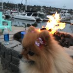 enjoying the marina and fire pit at this hidden gem of an awesome resort right in the heart of S