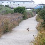 2 bunnies on path to lhe Living Coast (low building)
