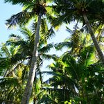 Likuliku Lagoon Resort Foto