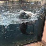 Foto di New York Aquarium