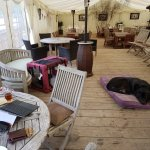 Very dog friendly. This is a marquee at the rear of the pub, allowing us to work and have the do