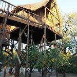 Tree House #1 (Zebra)