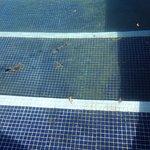 Floating debris on pool surface