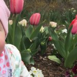 Tulips (and a bit of baby)