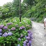 Photo of Shimoda Park