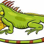 Loane notre logo iguane !