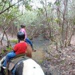 Foto di Blanche Manor Horseback Riding