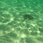 Stingray seen off of Saona Island