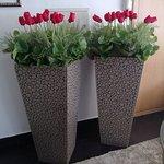 Foto de Hotel Tulipa