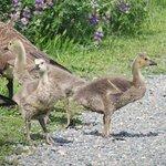 Foto de Nisqually National Wildlife Refuge