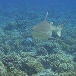 Photo de TOPDIVE Bora Bora