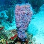 Neat sponge