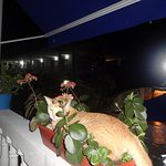 Photo of Hosteria Mar y Sol