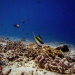 Foto de Blue Marlin Dive Gili Trawangan