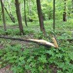 Photo of Troparevsky Forest Park