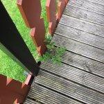 weeds growing through decking