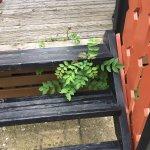 tired decking, weeds, peeling paint