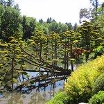 On admire le travail des jardiniers qui taillent ces arbres...