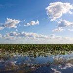 Wetlands Airboat Safari