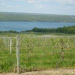 Foto de Seneca Lake Wine Trail