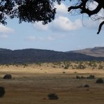 View from the central lodge across the plain. There were many animals in view at any time.
