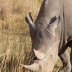 Rhinos near the lodge