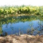 Photo de Riserva Naturale fiume Ciane