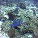 Foto di Palancar Reef