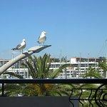 Even the seabirds are friendly at the Hotel Marina Rio