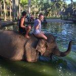 Elephant Safari Park & Lodge Foto