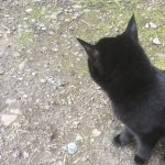 Sooty the farm cat