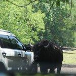 Harmony Park Safari Foto