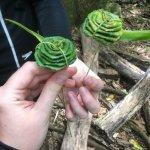 Eric's plant origami