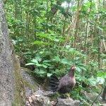Jungle Chicken
