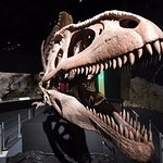 Foto de Museo Paleontologico Egidio Feruglio