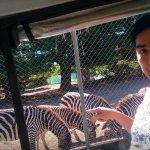 Z for Zebra!