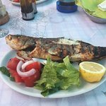 Enjoyed several meals at this lovely Greek Family run taverna. Food excellent especially the Sea