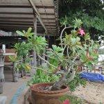 Photo de Cactus Bungalow