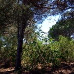 Belambra Clubs - Pineto Photo