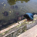 Guide getting the turtles ready for a snack