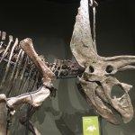Sam Noble Oklahoma Museum of Natural History Foto