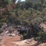 Photo of Aphrodite Trail