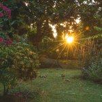 View of the sun setting from the garden